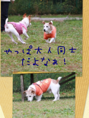 20151103123817965.png