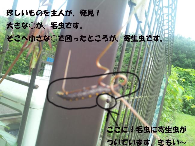 058-147890-4689-555.jpg