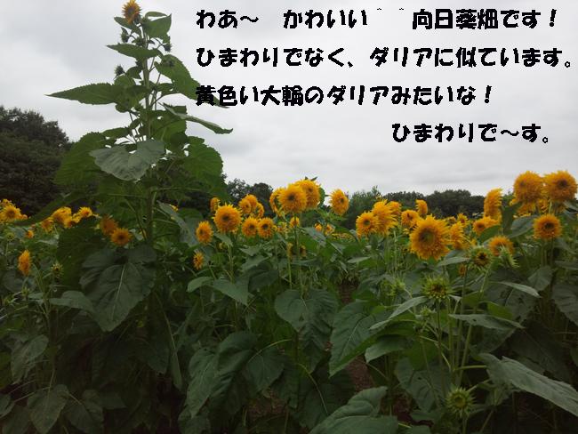 174-357990-679-35789.jpg