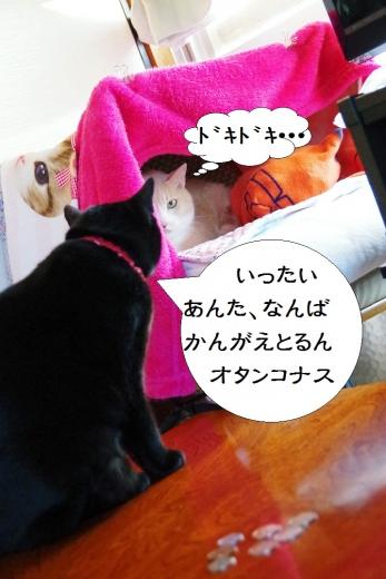 きなっちゃん社長&雲丹専務