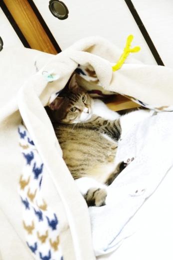 雲丹専務&テント