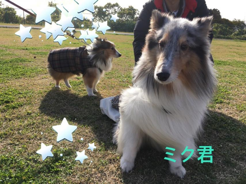 fc2blog_20151207214442042.jpg