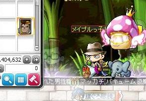 Maple13397a.jpg