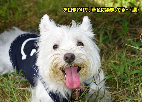 DSC_0093-s.jpg