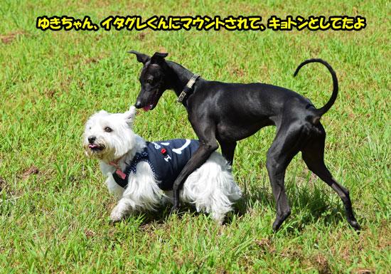 DSC_0113_201509051911578e3.jpg