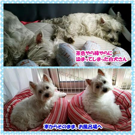 PhotoGrid_1441434670819.jpg