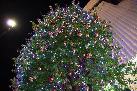 151205 クリスマスツリーm
