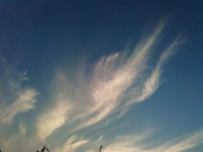 20151020天使の巻き毛
