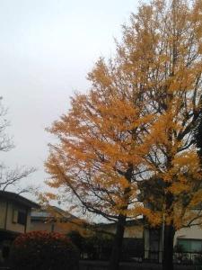 20151123黄葉