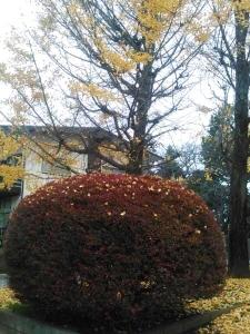 20151125紅葉・黄葉