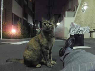 asagaya-street332.jpg