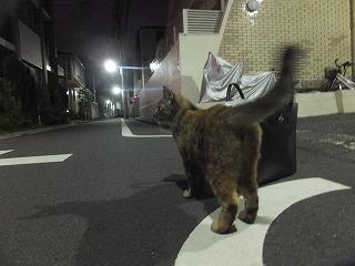 asagaya-street333.jpg