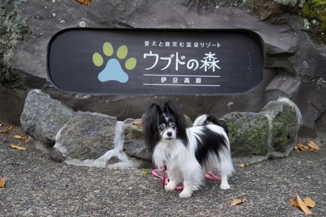 マリィとオッサンの伊豆二人旅(4日目)-001