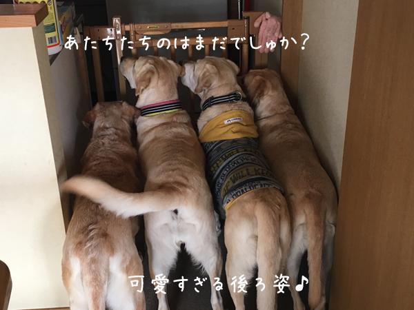 4wandaidokoro.jpg