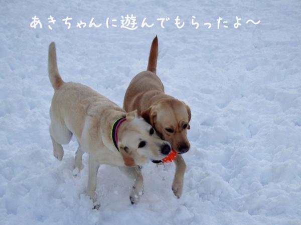 aki1_20151207212705935.jpg
