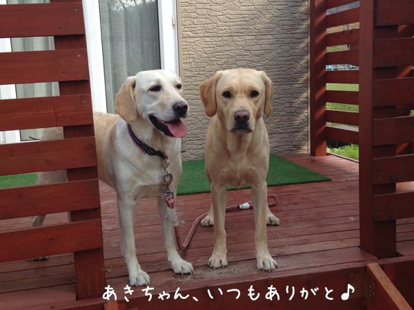 aki_20151027205226c2e.jpg