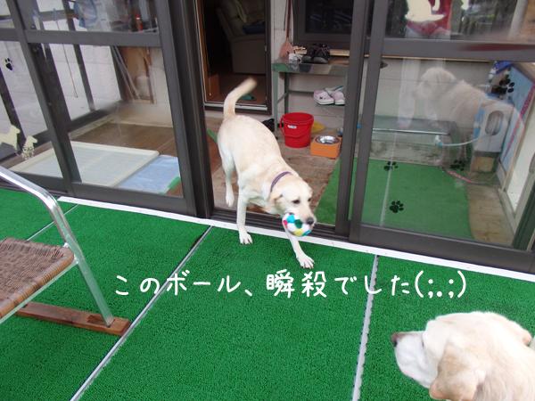 ball_201509200724150c0.jpg