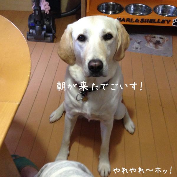 eriasa_201510272030468c0.jpg