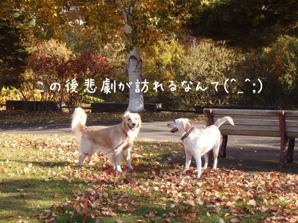 erihina_201510272001370af.jpg