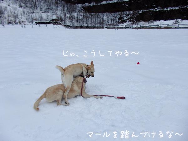 erimaru2_2015120120043198c.jpg