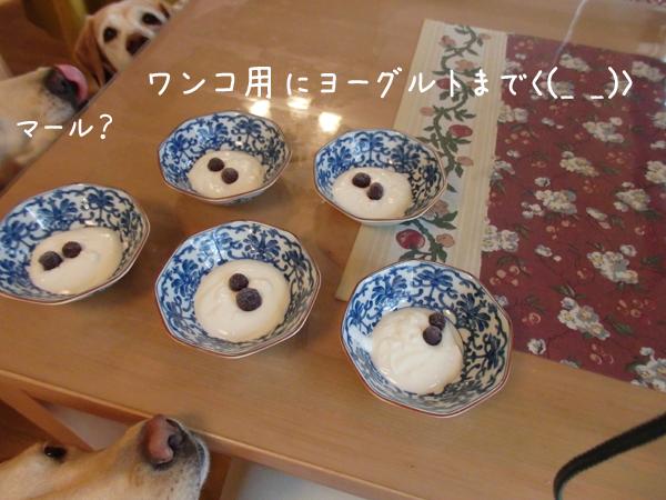 yogurutosara.jpg