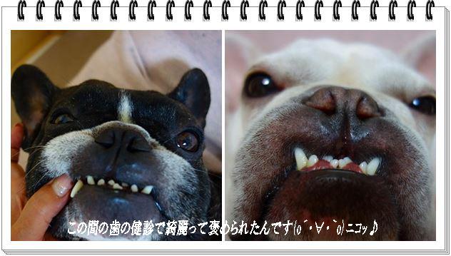 cats歯