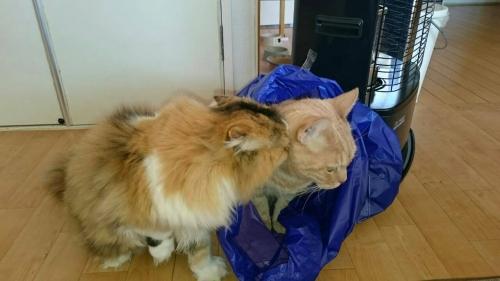 袋入りプーとヴィオ
