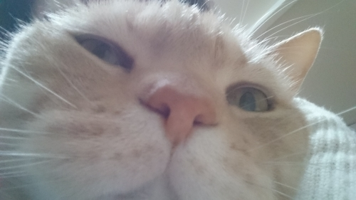 猫の自撮り