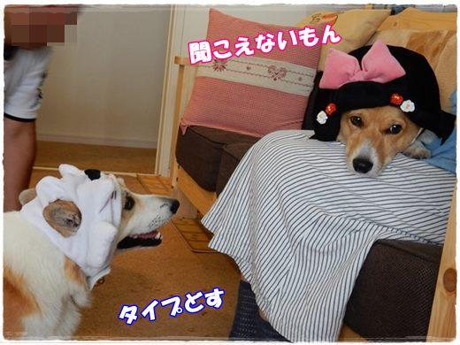 20150903-8.jpg