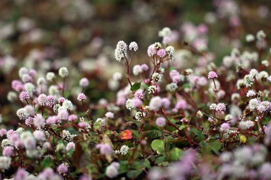 3_ピンクの絨毯