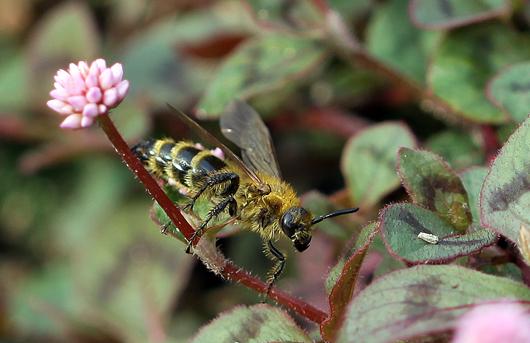 5_11月の蜂