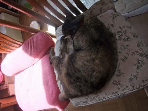 私の椅子①