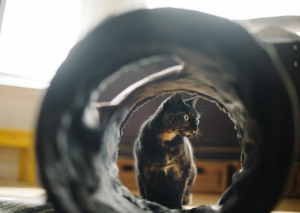 猫用トンネル サバンナ