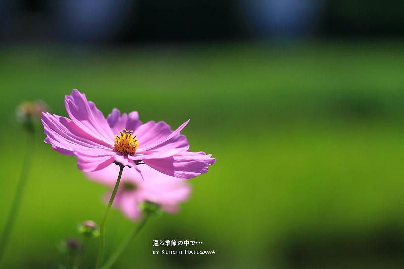 _MG_2607.jpg