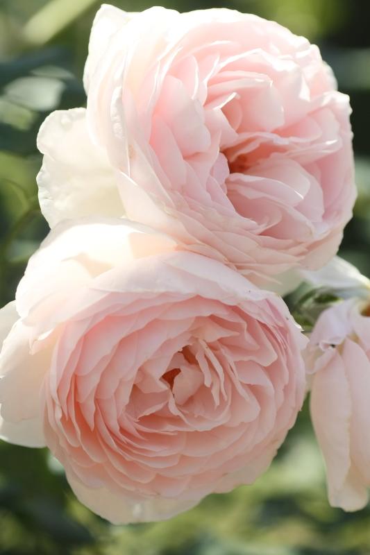 Suminoe Sewage Treatment (Rose Garden)