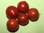 tomato150831.jpg