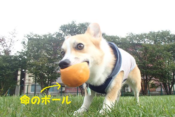 命のボール