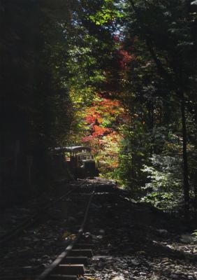 森林鉄道と、紅葉