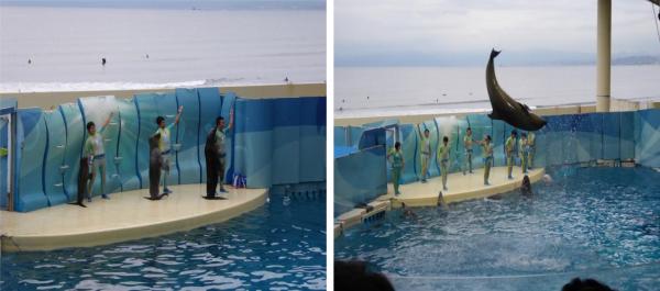 新江ノ島水族館3