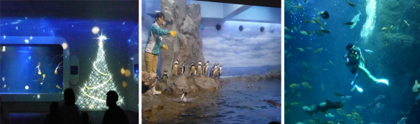 新江ノ島水族館4