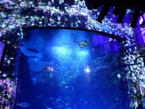 新江ノ島水族館6