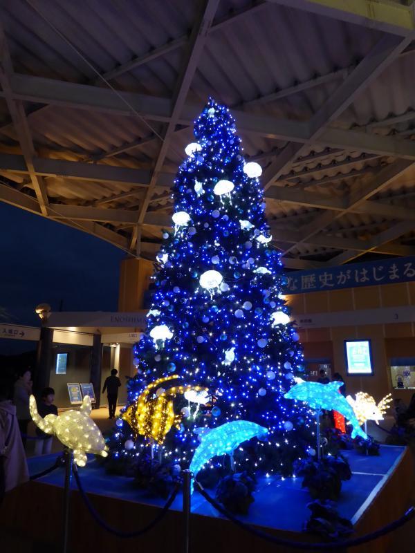 新江ノ島水族館8