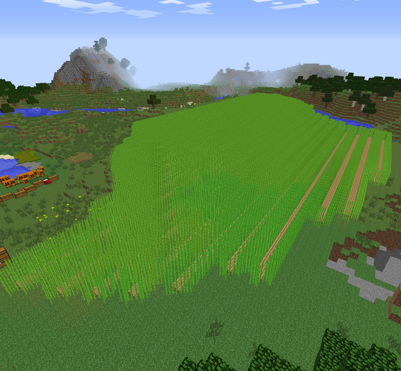 サトウキビ畑2