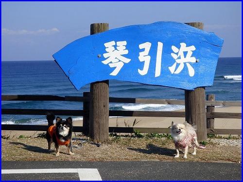 2015琴引浜 (1)