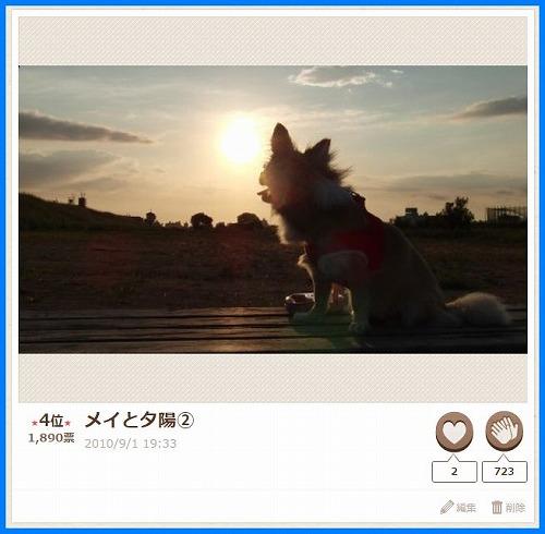 2015senaka3.jpg
