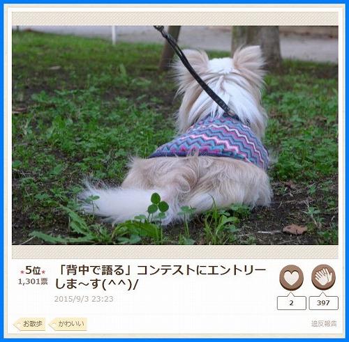 2015senaka4.jpg