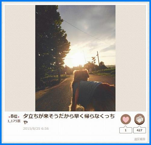 2015senaka5.jpg