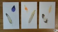 ぽち袋 Feathers サイン