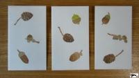 ぽち袋 木の実 サイン