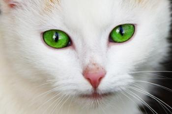 cat-with-green-eyes-871298226869aN0_convert_20150907204836.jpg